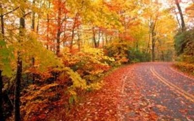 Fall Leaf Pick Up Scheduled 10/15/19 to 11/27/19